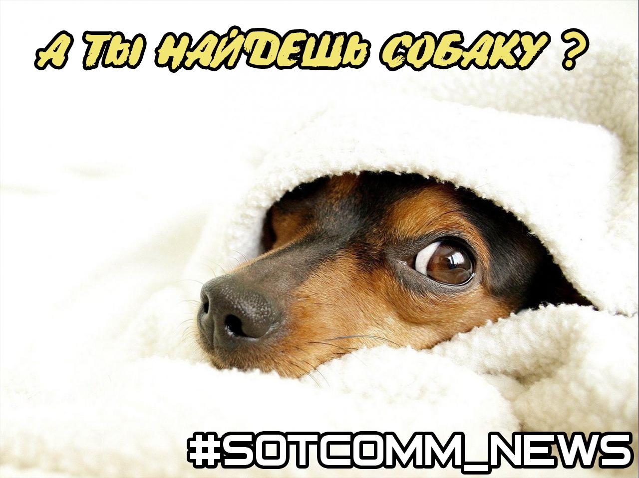 news_dog